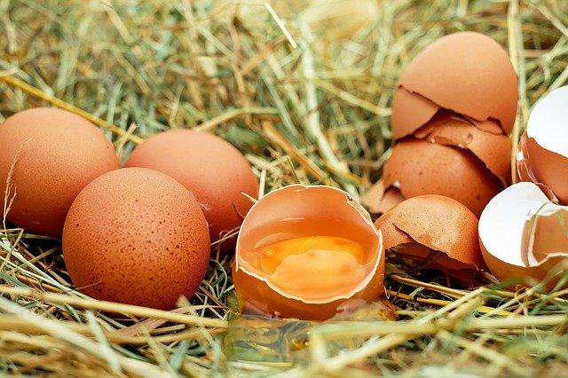 Eggs, cracked egg, and eggshells in bird nest