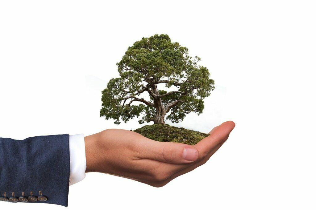 Business hand holding a growing tree
