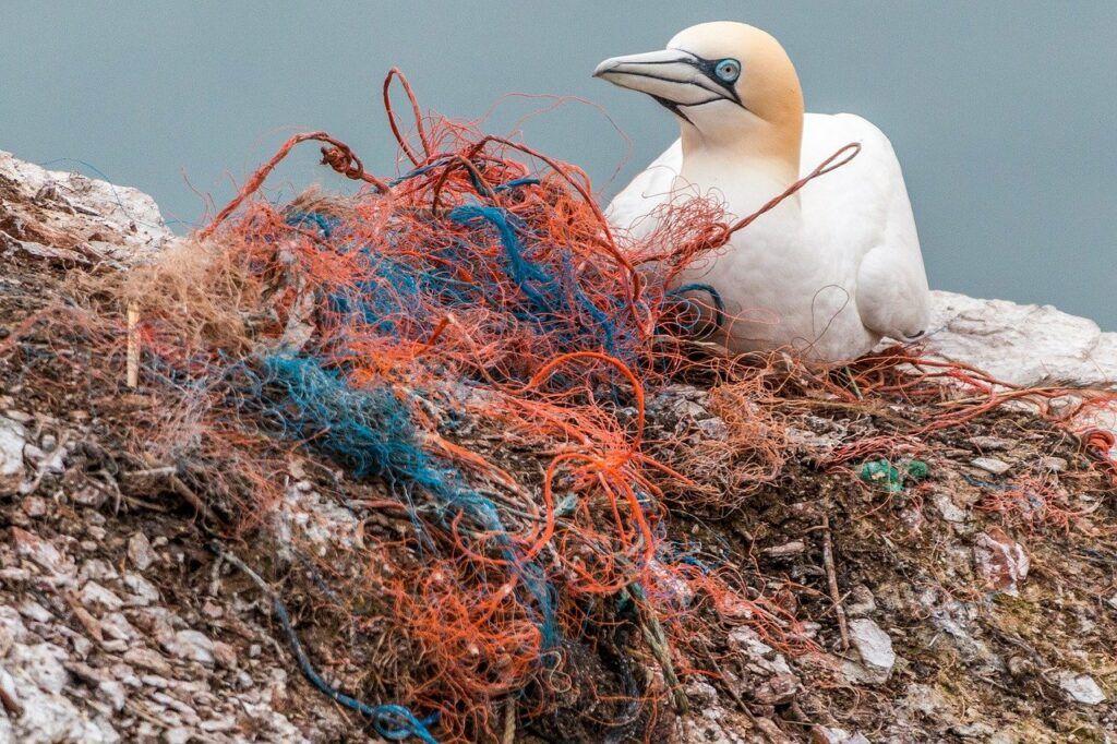 Bird next to plastic nets