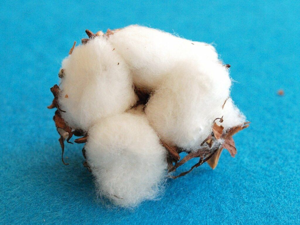 Cotton fluff in ball