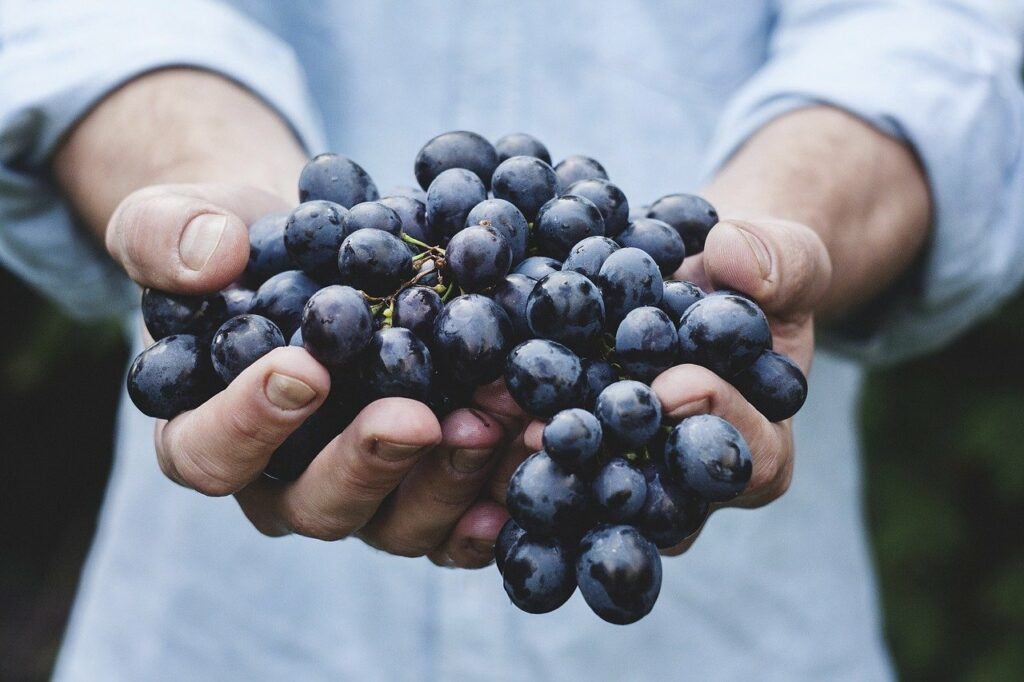 Grapes being held in hands